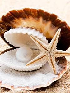 Fotos Hautnah Perlen Seesterne Muscheln Sand Salz