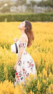 Fotos Acker Asiaten Bokeh Braunhaarige Kleid Der Hut