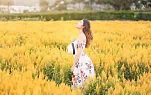 Fotos Acker Asiaten Bokeh Braunhaarige Kleid Der Hut Mädchens