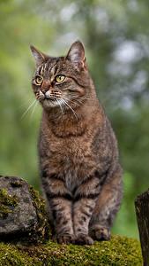 Desktop hintergrundbilder Hauskatze Stein Unscharfer Hintergrund Laubmoose Sitzend Tiere
