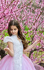 Bilder Frühling Blühende Bäume Kleine Mädchen Kleid Kinder