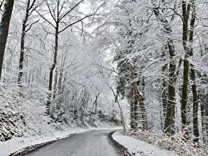 Bilder Winter Wälder Straße Schnee Bäume Natur