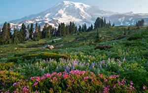 Bilder USA Park Landschaftsfotografie Gebirge Gras Mount Rainier National Park