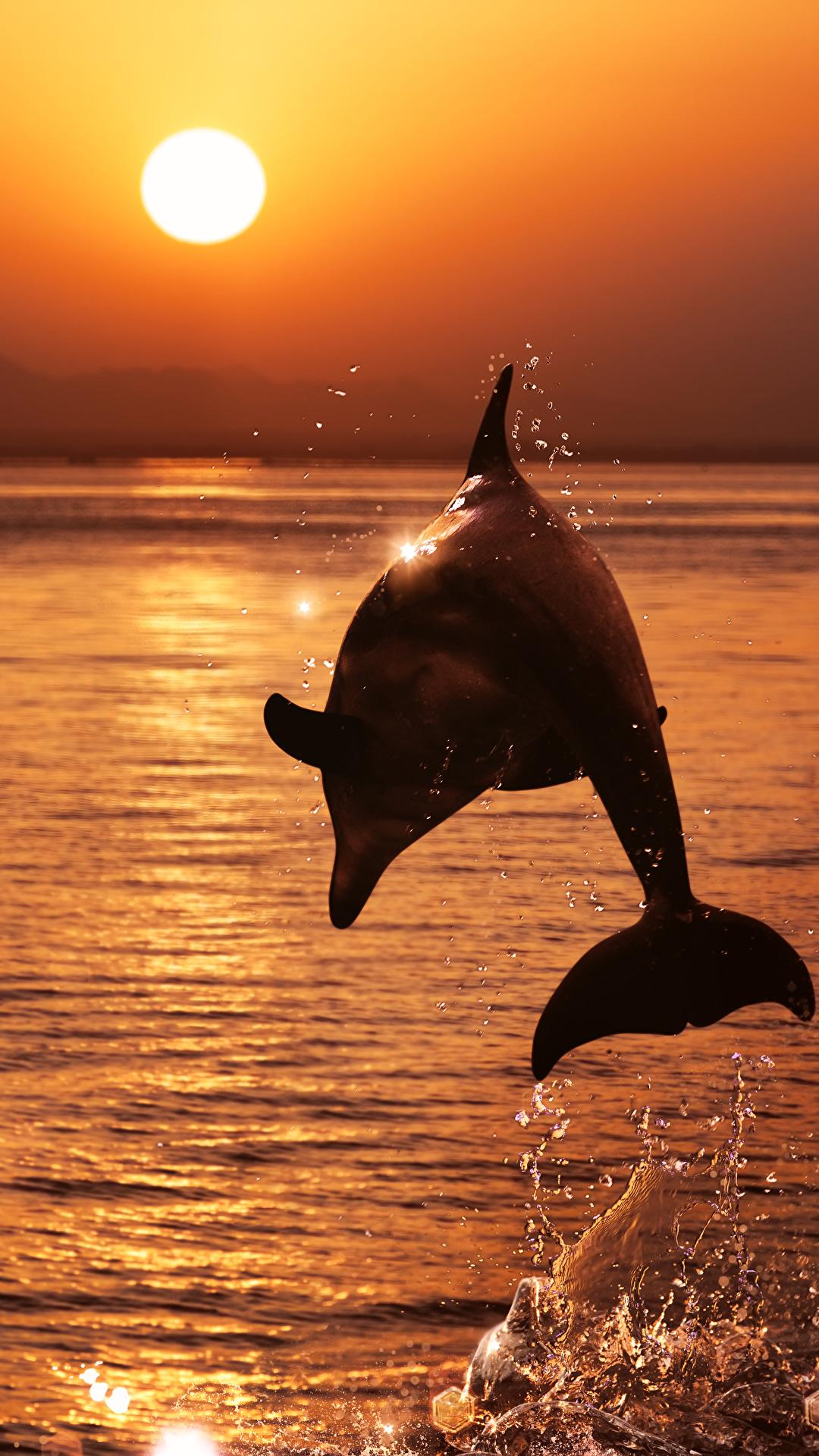 Foto Delfine Meer Sonne Sprung Sonnenaufgänge und Sonnenuntergänge Tiere 1080x1920