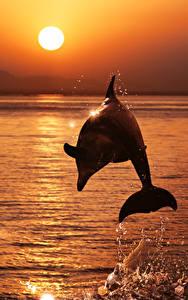 壁纸、、イルカ、朝焼けと日没、海、飛び、太陽、動物