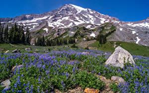 Bilder USA Park Gebirge Steine Glockenblumen Landschaftsfotografie Van Trump Park