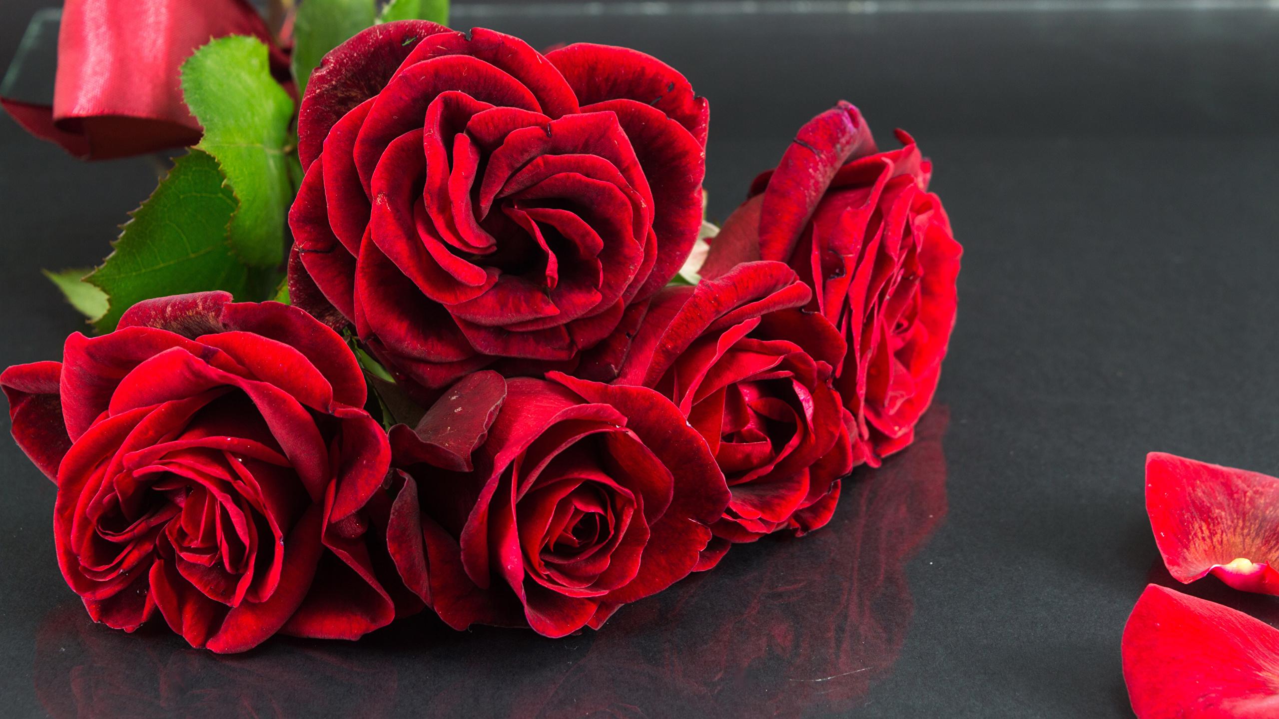 Fonds Decran 2560x1440 Roses En Gros Plan Rouge Fleurs