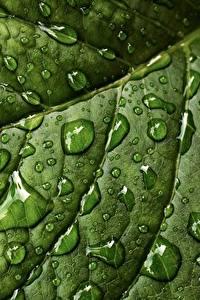 Hintergrundbilder Großansicht Makrofotografie Textur Blattwerk Tropfen Grün