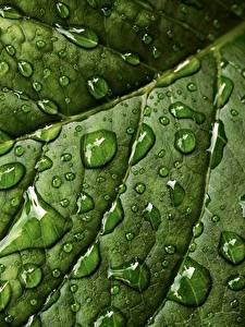 Hintergrundbilder Großansicht Makrofotografie Textur Blattwerk Tropfen Grün Natur