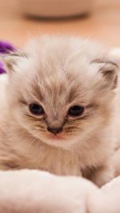 Hintergrundbilder Katze Katzenjunges