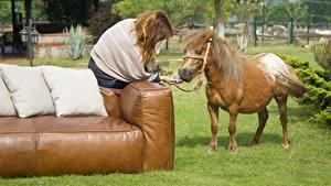 Bilder Hauspferd Sofa Kissen Gras Braune Haare Sitzt ein Tier