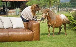 Bilder Hauspferd Sofa Kissen Gras Braune Haare Sitzt Tiere