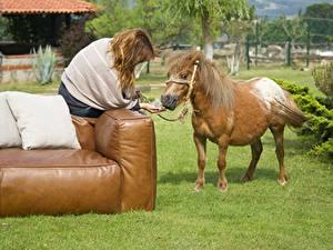 Bilder Hauspferd Sofa Kissen Gras Braune Haare Sitzend Tiere