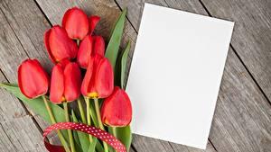 Bilder Tulpen Rot Bretter Blatt Papier Vorlage Grußkarte Blüte