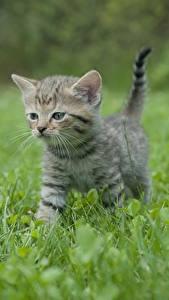 Hintergrundbilder Katzen Gras Kätzchen Unscharfer Hintergrund ein Tier
