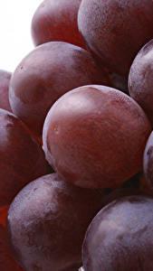 Bilder Hautnah Weintraube Beere das Essen