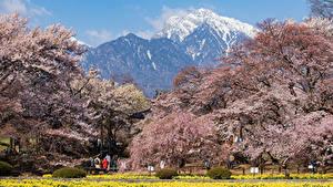 Bilder Japan Park Gebirge Blühende Bäume Hokuto Yamanashi Prefecture