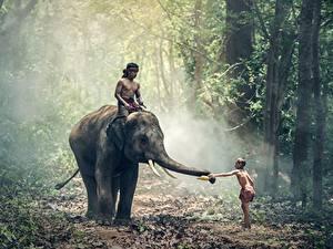 Wallpaper Forests Elephants Asiatic Boys Fog Children