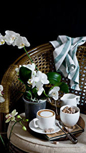 Photo Still-life Orchid Coffee Cappuccino Black background Cup Sugar Flowers