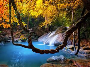 Bilder Tropen Thailand Wasserfall Herbst Ast
