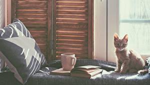 Hintergrundbilder Katze Kätzchen Blick Fenster Tasse Buch Tiere