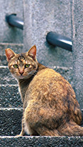 Hintergrundbilder Katze Sitzt Treppe Tiere