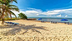 Hintergrundbilder USA Florida Strände Sonnenliege Palmengewächse Regenschirm Smathers Beach