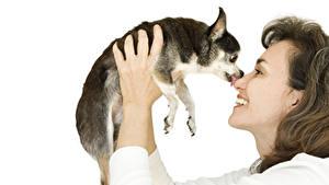 Hintergrundbilder Hunde Weißer hintergrund Braunhaarige Lächeln Chihuahua Hand Welpe Mädchens