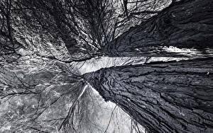 Fotos Baumstamm Schwarzweiss Untersicht Ansicht von unten Ast Bäume