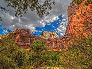 Bilder Vereinigte Staaten Zion-Nationalpark Gebirge Park HDR Wolke Ast Natur