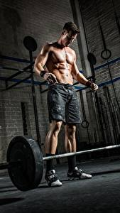 Pictures Man Bodybuilding Barbell Shorts Sport