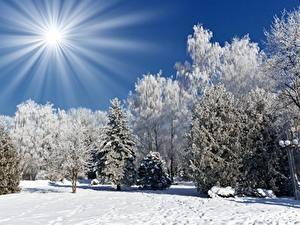 Fotos Winter Lichtstrahl Sonne Schnee Bäume