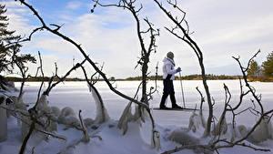 Hintergrundbilder Winter Skisport Schnee Ast Natur