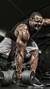 Bilder Bodybuilding Mann Hanteln Turnhalle Muskeln Körperliche Aktivität Sport