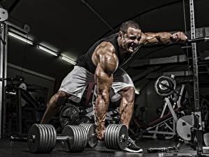 Bilder Bodybuilding Mann Hanteln Turnhalle Muskeln Körperliche Aktivität sportliches