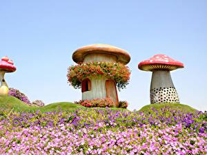 Hintergrundbilder Dubai Parks Pilze Natur Petunien Design Miracle Garden