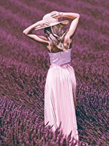 Desktop hintergrundbilder Felder Lavendel Blondine Hand Der Hut Mädchens