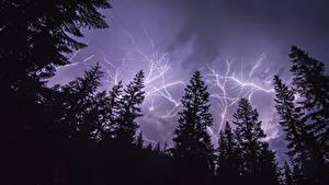 Fotos Himmel Blitz Fichten Nacht Natur