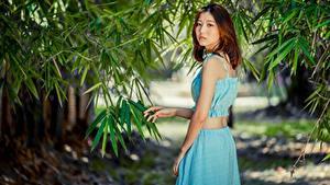 Bilder Asiaten Unscharfer Hintergrund Braune Haare junge frau