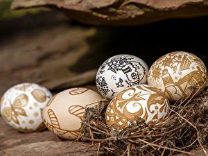 Fotos Feiertage Ostern Ei Nest Lebensmittel