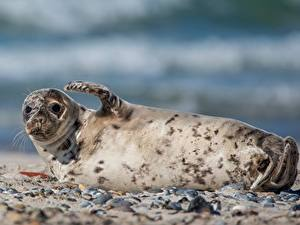 Fotos Robbe Pose Bokeh ein Tier