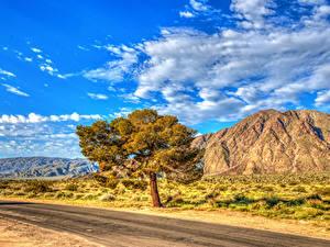 Bilder Vereinigte Staaten Park Straße Himmel HDRI Kalifornien Bäume Wolke Anza-Borrego State Park Natur