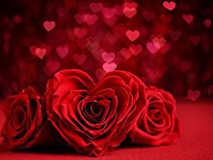 Fotos Rosen Hautnah Rot Herz Drei 3 Blüte