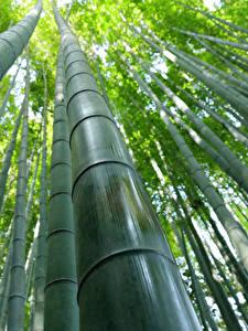 Hintergrundbilder Bambus Großansicht Untersicht Ansicht von unten Natur