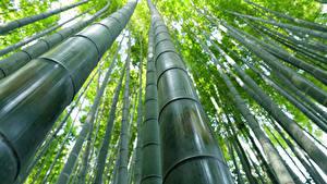 Hintergrundbilder Bambus Großansicht Untersicht Ansicht von unten