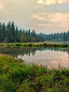 Hintergrundbilder Alaska Park See Wälder Gras Denali National Park Horseshoe Lake
