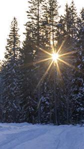 Hintergrundbilder Jahreszeiten Winter Wälder Schnee Lichtstrahl Fichten