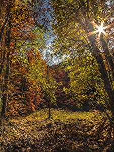 Hintergrundbilder Montenegro Park Wälder Herbst Bäume Lichtstrahl Blattwerk Biogradska Gora National Park