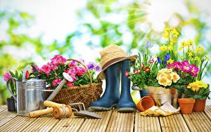 Fotos Schlüsselblumen Narzissen Gänseblümchen Bretter Stiefel Der Hut Blumen
