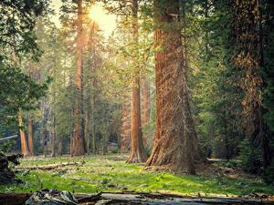 Bilder Vereinigte Staaten Park Wälder Kalifornien Bäume Sequoia National Park Natur